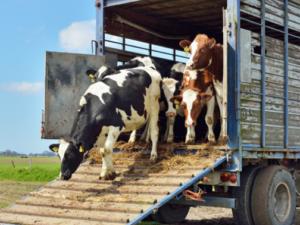Bienestar Animal para transportistas